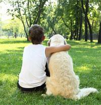 Dont let fleas bully your pet