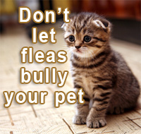 Do not let fleas bully your pet